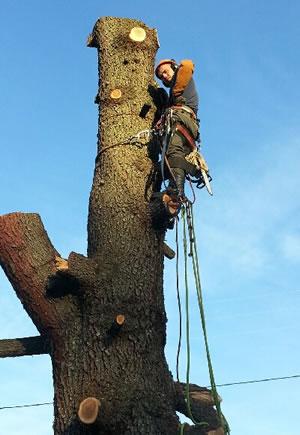 Elagage et abattage d 39 arbres franck lopez lyon for Devis elagage